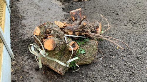 Steve Collins Surfacing Tree root removal